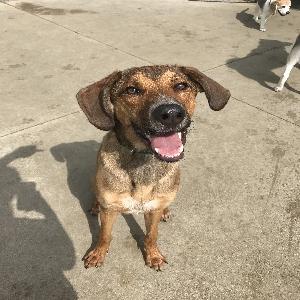 adoptable Dog in Milan, MI named Mac