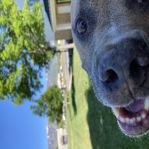 adoptable Dog in Ogden, UT named Hudson