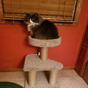 adoptable Cat in Clementon, NJ named Milo