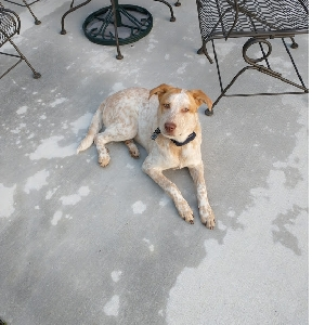 adoptable Dog in Covington, LA named Lucy