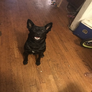 adoptable Dog in Washington, DC named King