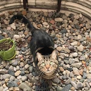 adoptable Cat in Warren, MI named Catniss
