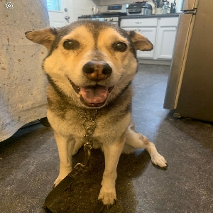 adoptable Dog in Brightwaters, NY named Maxie