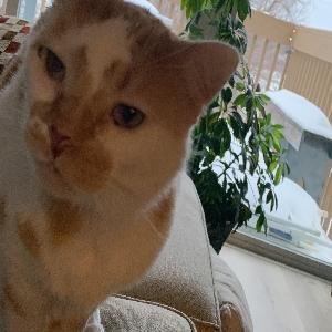 adoptable Cat in Cedar Rapids, IA named Grumpy cat
