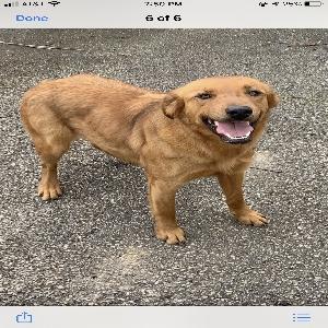 adoptable Dog in Vine Grove, KY named Bailey