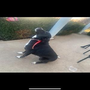 adoptable Dog in Vine Grove, KY named Cooper