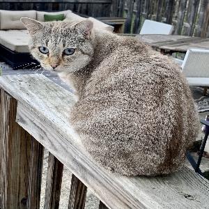 adoptable Cat in Washington, DC named Dexter