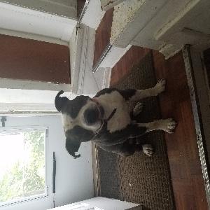 adoptable Dog in Detroit, MI named King