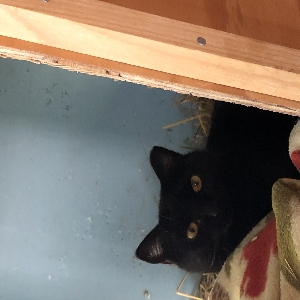adoptable Cat in Harwich Port, MA named Luna