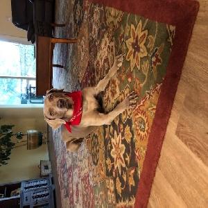 adoptable Dog in Saint Augustine, FL named Wendy