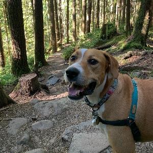 adoptable Dog in Seattle, WA named Moose