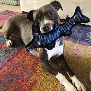 adoptable Dog in Saint Augustine, FL named Wyatt