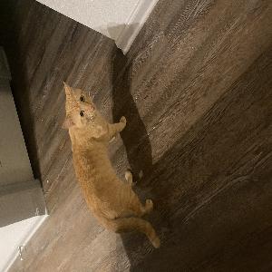 adoptable Cat in Lebanon, TN named Greg