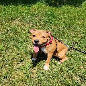 adoptable Dog in Hauppauge, NY named Kenzo