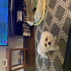 adoptable Dog in Virginia Beach, VA named Bella