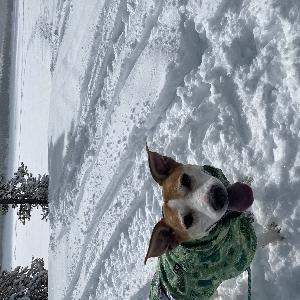 adoptable Dog in Indianola, WA named Nola
