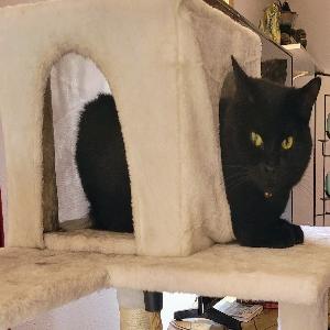 adoptable Cat in El Prado, NM named Sweetie