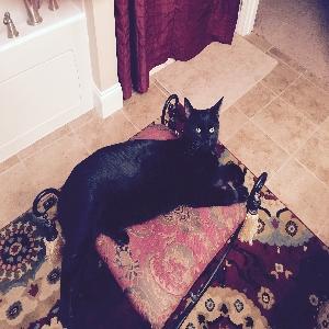 adoptable Cat in Saint Augustine, FL named Tucker