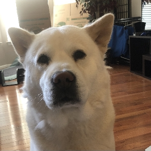 adoptable Dog in Dumfries, VA named Max