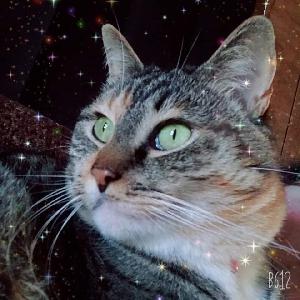 adoptable Cat in Antioch, TN named Carmilla