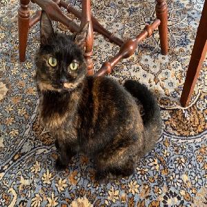adoptable Cat in Norfolk, VA named Gina