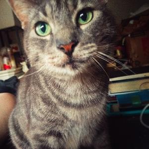 adoptable Cat in Beaverton, OR named Giles