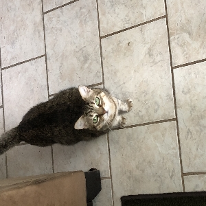 adoptable Cat in Patchogue, NY named Elsa