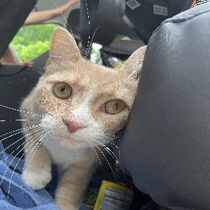adoptable Cat in Hamilton, OH named Parker