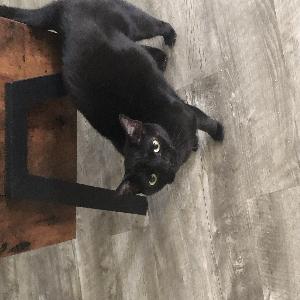 adoptable Cat in Melbourne, FL named Ember