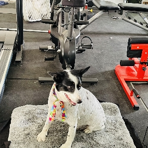adoptable Dog in Richland, WA named Lucy