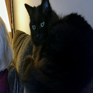 adoptable Cat in Kings Park, NY named Sabrina