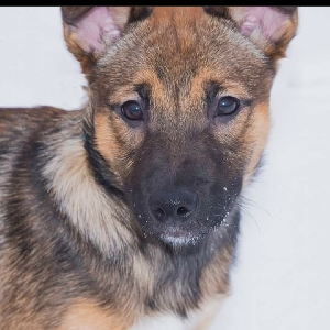 adoptable Dog in Poughkeepsie, NY named Hunter-West