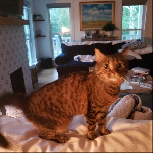 adoptable Cat in Lewisberry, PA named Lucy