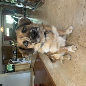 adoptable Dog in Lenoir City, TN named Lulu
