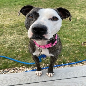 adoptable Dog in Irwin, PA named Phoebe