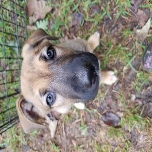 adoptable Dog in Conroe, TX named Alpha