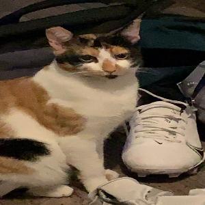 adoptable Cat in Monroe, WA named Mulan