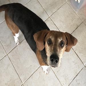 adoptable Dog in Manassas,VA named Margo