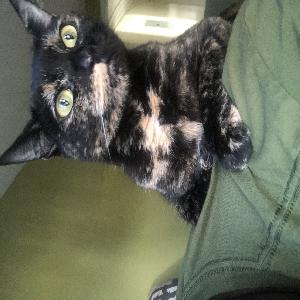 adoptable Cat in Hempstead, NY named Keanu