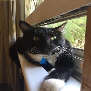 adoptable Cat in Albuquerque, NM named Sylvester