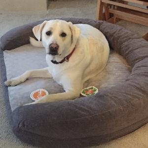adoptable Dog in Marshfield, MA named Bella