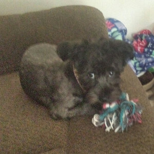 adoptable Dog in Clearfield, UT named Harley