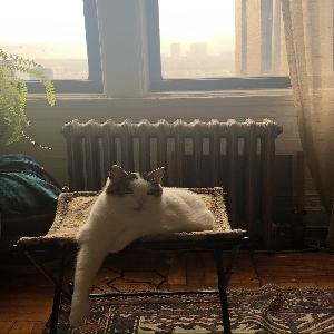 adoptable Cat in New York, NY named Alexander